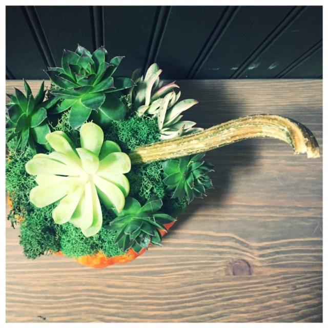 pumpkin-top3
